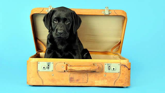dog friendly, hospitality, wakeupcall, marketing, blog, dogs, hotels